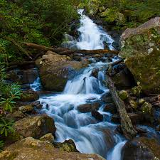 Clear water stream pic